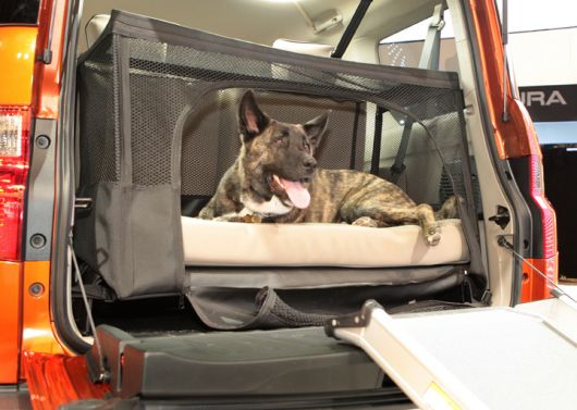 honda element dog 3 09